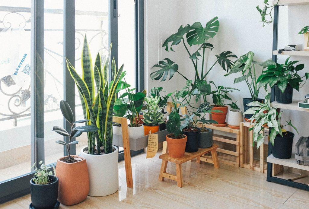 indoor garden in a studio apartment
