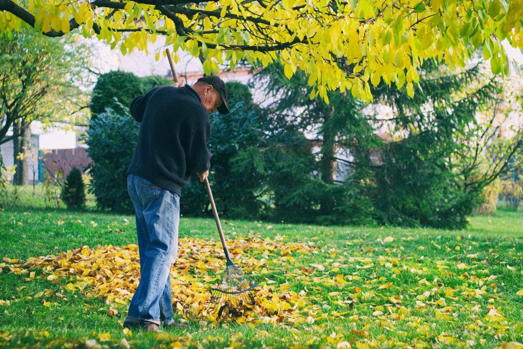 Old man racking leaves-min